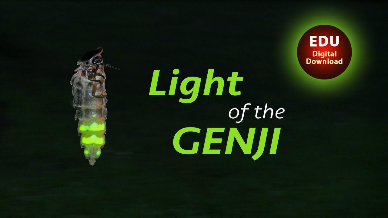 LIght of the Genji - EDU