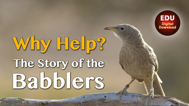Why Help? The Story of the Babblers - EDU