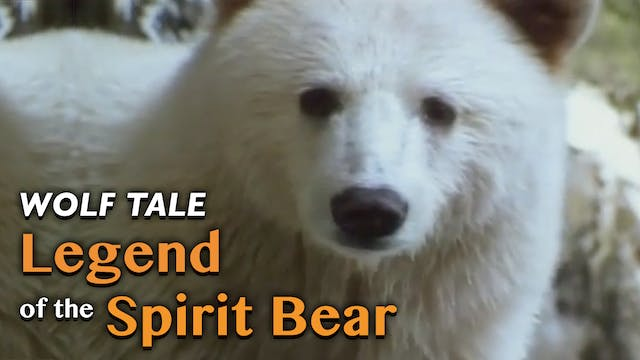WOLF TALE: Legend of the Spirit Bear