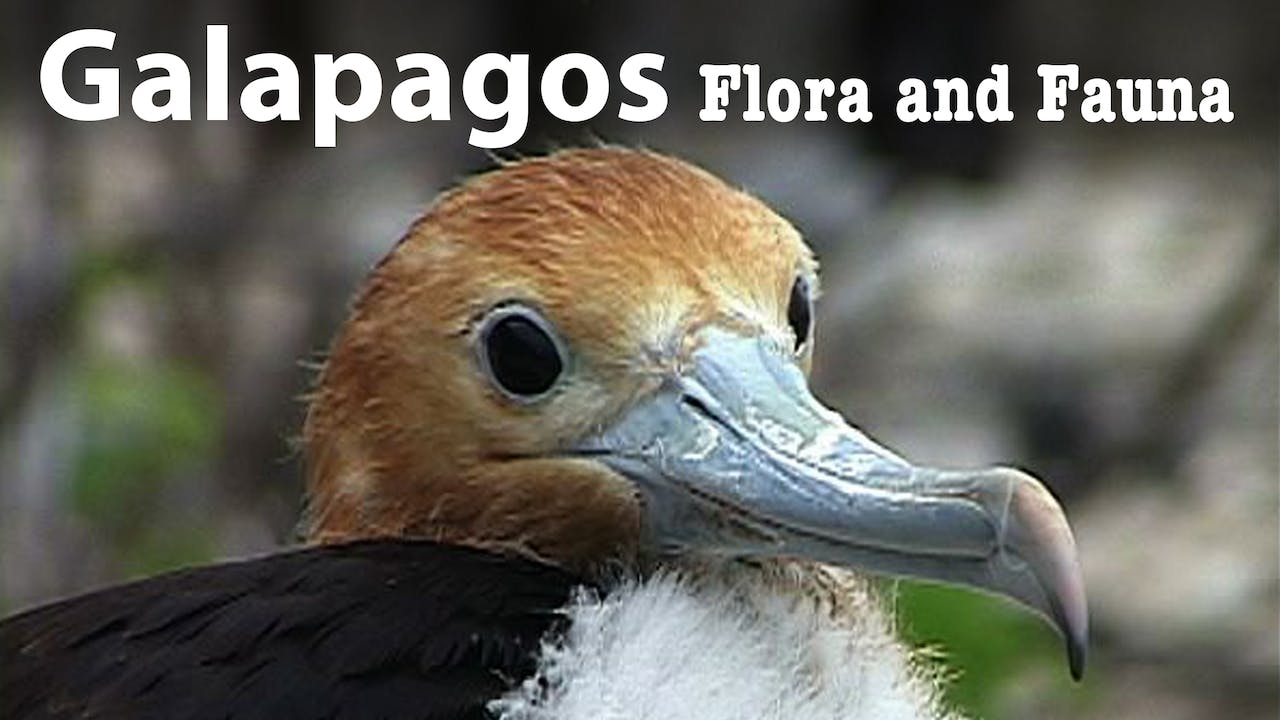 GALAPAGOS: Flora and Fauna