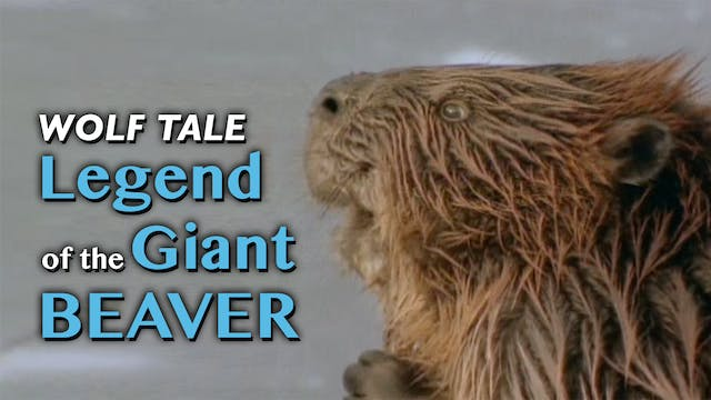 WOLF TALES: Legend of the Giant Beaver