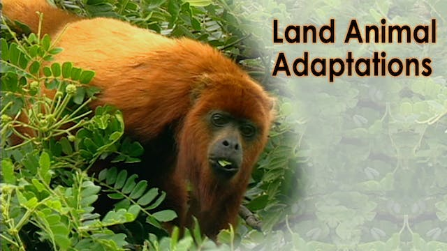 Land Animal Adaptations