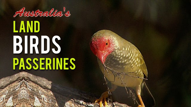 AUSTRALIA'S LAND BIRDS Passerines