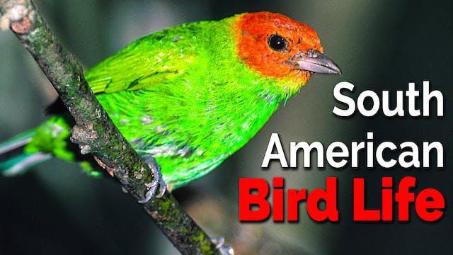 South American Bird Life