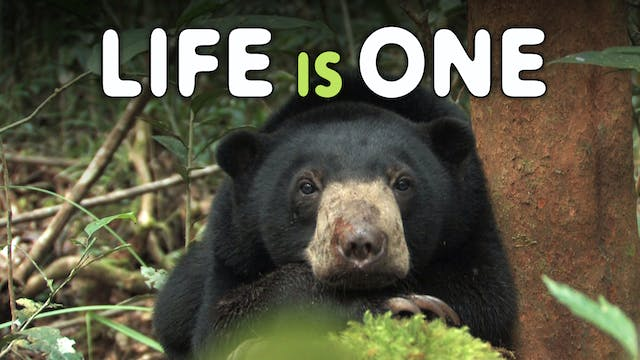 LIFE IS ONE Return to the Wild for 3 Sun Bears