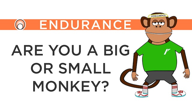 Are you a Big or Small Monkey?