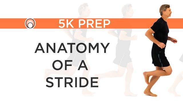 Anatomy of a Stride