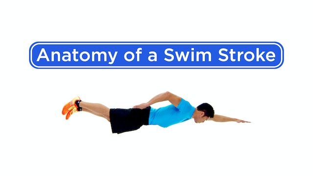 Anatomy of a Swim Stroke