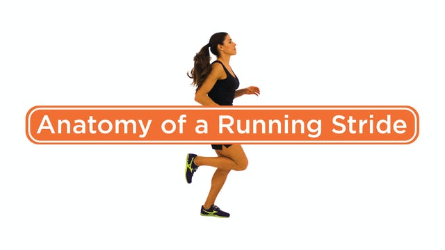 Anatomy of a Running Stride