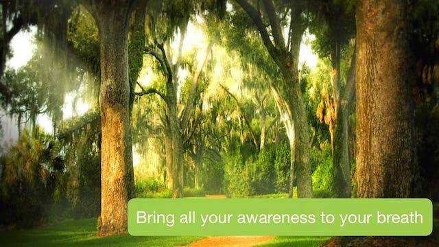 Day 1 Meditation - Observation of Breath (7 mins)