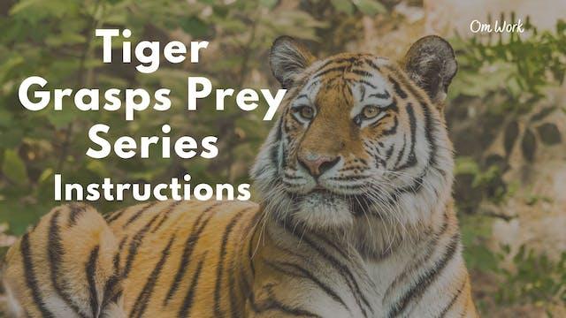Om Work - Tiger Grasps Prey series (9...