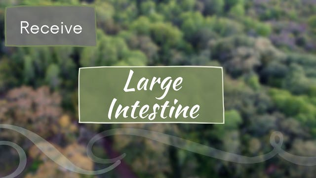 Large Intestine Meridian - Receive (2...