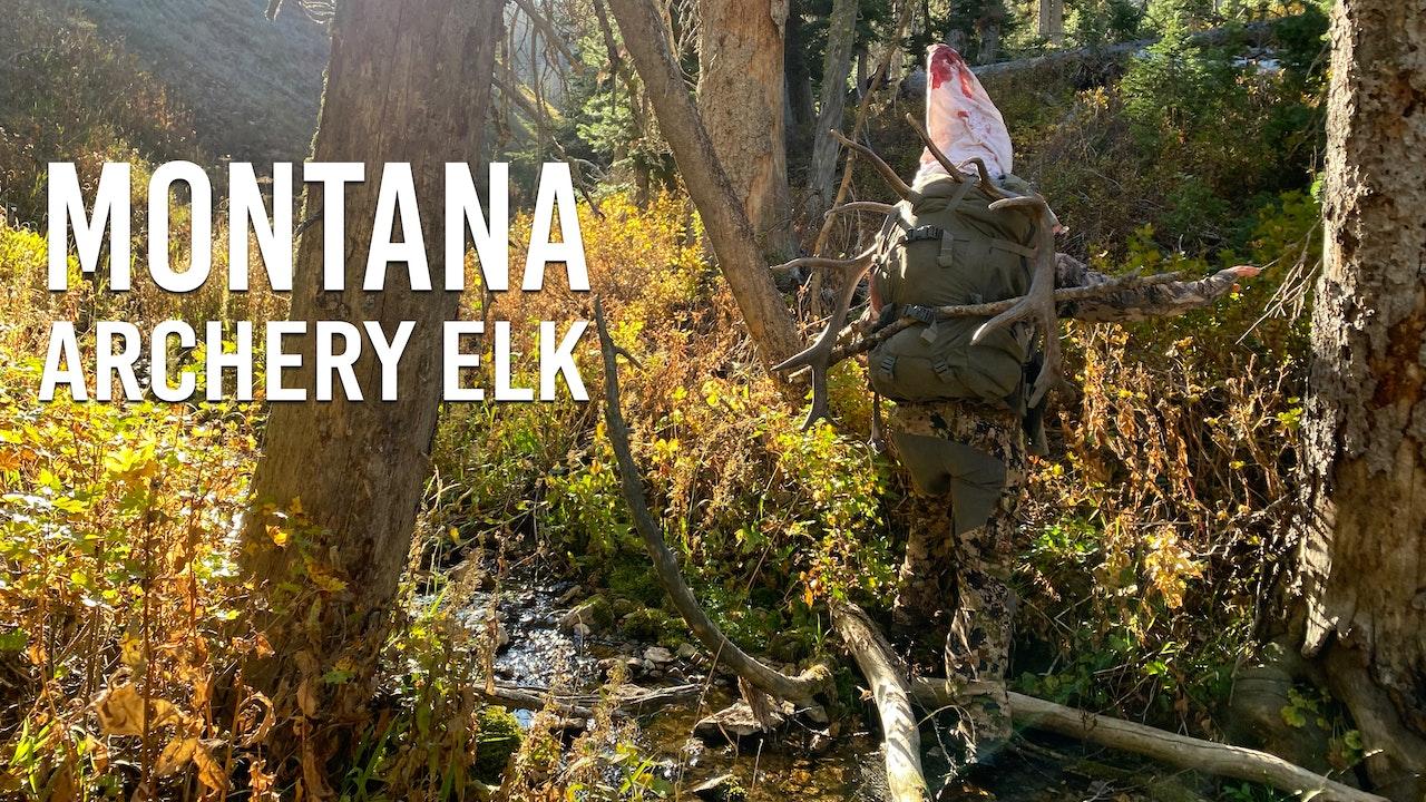 Montana Archery Elk with Marcus and Kara