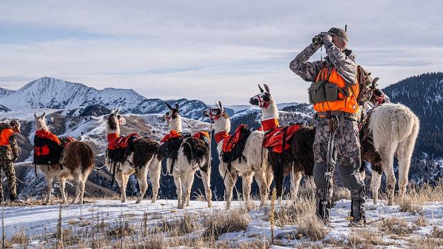 Public Land Bulls | Montana Rifle Elk with Beau Baty and Matt Seidel