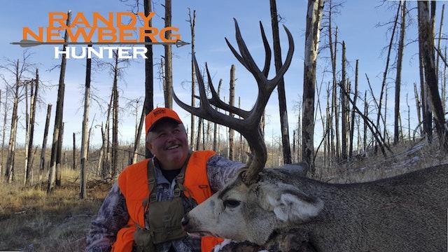 Montana Deer - Old Friends & New Memories