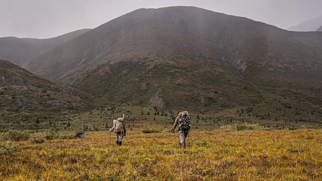 An Alaskan Adventure | Alaska Moose w...
