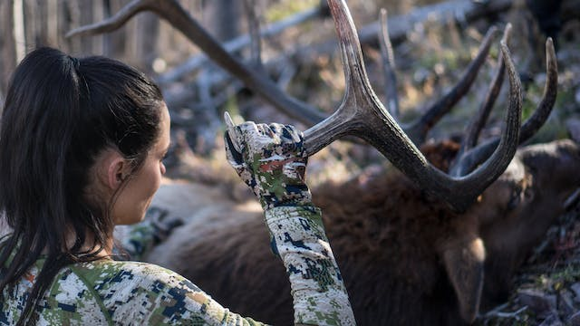 New Mexico Rifle Elk with Bruce and T...