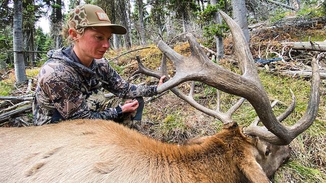 Public Land Bull Down! | Montana Archery Elk With Marcus and Kara