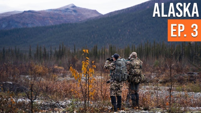 On The Search For A Legal MOOSE | Alaska Moose & Caribou (EP. 3)
