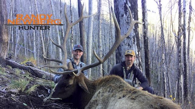 New Mexico Wilderness Elk with Leupold Optics