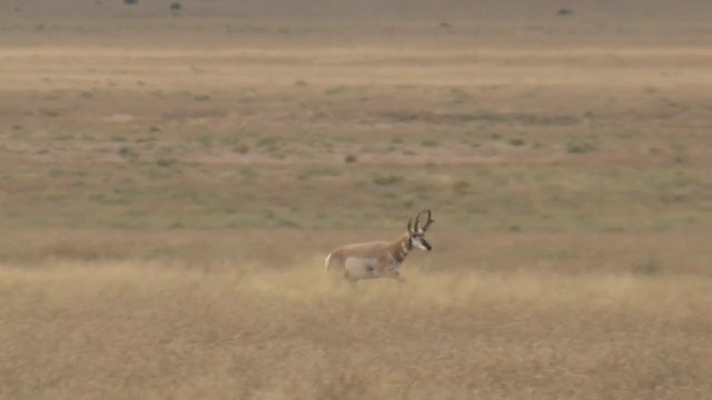 On Your Own Adventures: Season 1, Episode 3 - New Mexico Pronghorn