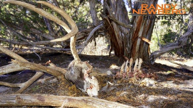 Colorado Rifle Mule Deer - This one, ...