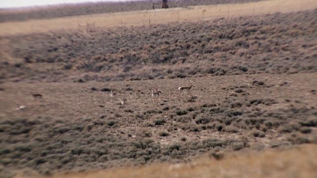 Fresh Tracks: Season 1, Episode 3 - Wyoming Pronghorn
