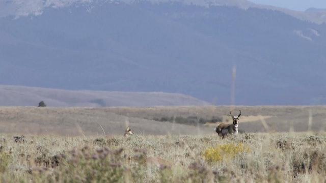 On Your Own Adventures: Season 1, Episode 7 - Colorado Pronghorn
