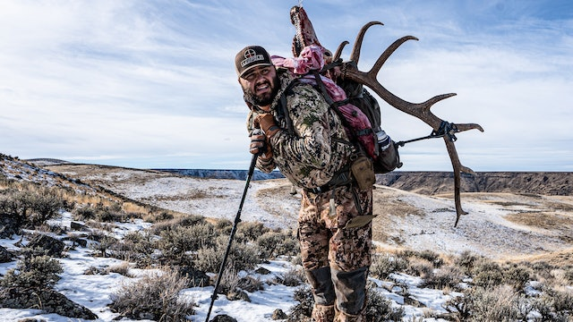 Where are All the Migrating Elk?