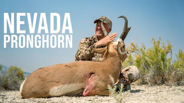 Nevada Pronghorn