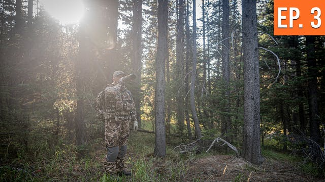 Switching Spots To Grizzly Country | ...