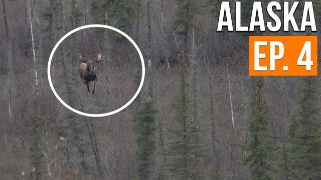 BULL MOOSE SPOTTED | Alaska Moose & Caribou (EP. 4)
