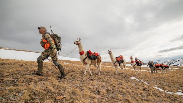 Montana Rifle Elk Opener