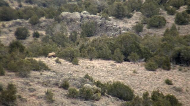 On Your Own Adventures: Season 2, Episode 8 - Nevada Elk