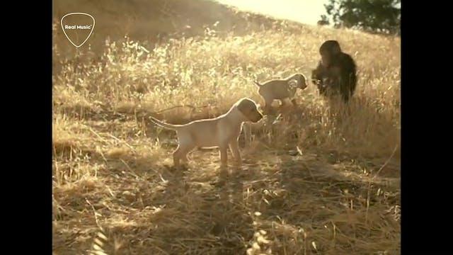 My Music: Alecia Davis - Weezer - Isl...