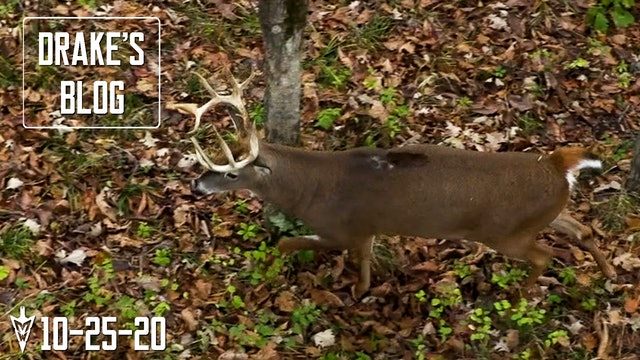 Drake's Blog: Rattling a Buck Right to the Tree | Calling to Pre-Rut Whitetails