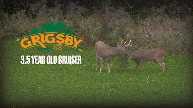 October Action: Crossbow Doe Patrol and a Bruiser 3.5-Year-Old