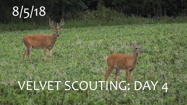 Winke's Blog: Velvet Scouting Day 4