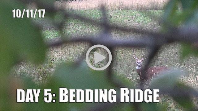 Winke Day 5: Bedding Ridge