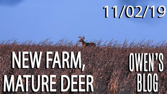 Owen's Blog: New Farm, Mature Deer