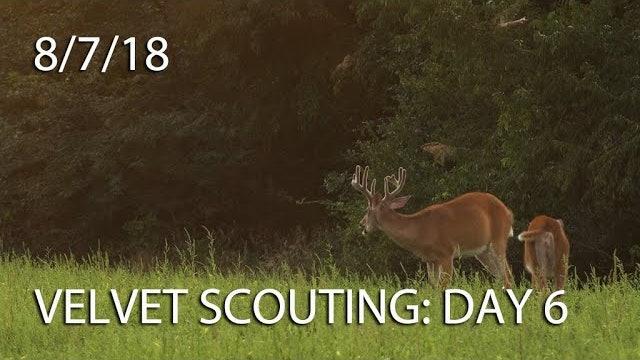 Winke's Blog: Velvet Scouting Day 6