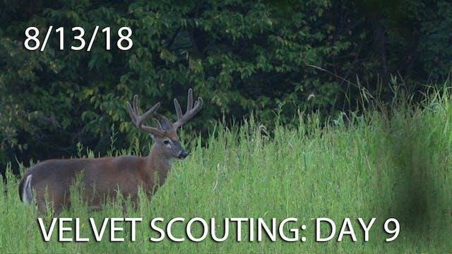 Winke's Blog: Velvet Scouting Day 9