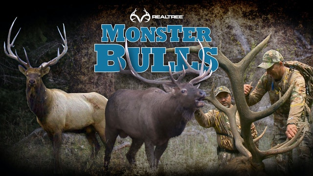 Monster Bulls