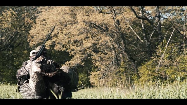 Hunting Henned-Up Gobblers | A First ...