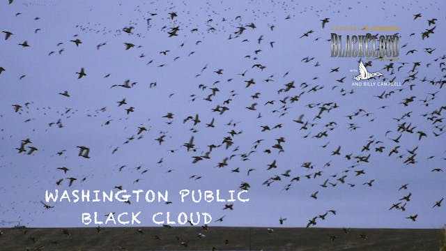 Washington Public-Land Duck Hunting