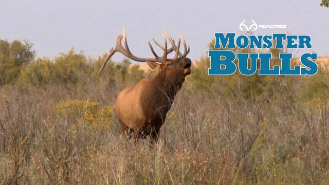 Monster 7x7 Bull In Colorado at 15 Ya...