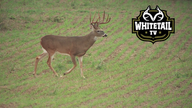 Crop Dusters, No Man's Land, and a Buck Named Boo