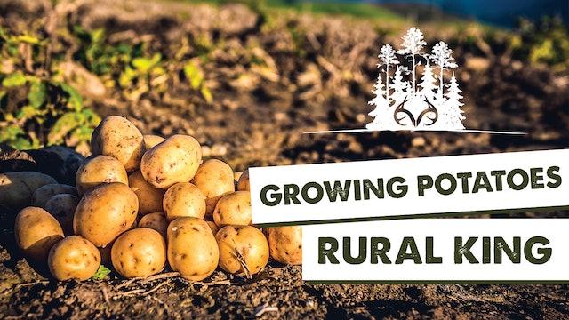 Home Garden Maintenance 101 | Revisiting a Successful Garden | Pay Dirt