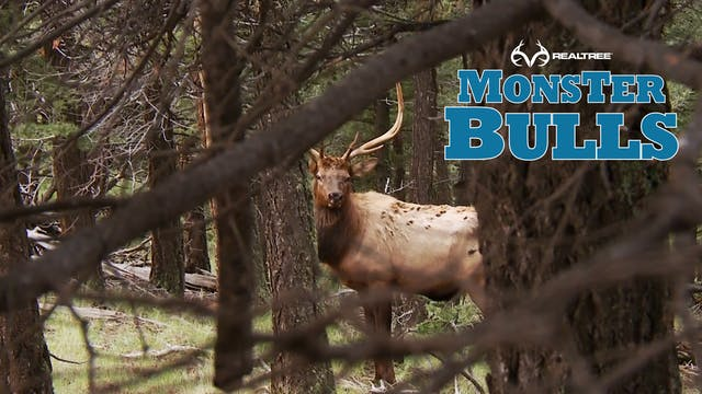 7 Days Of Hunting Finally Pays Off | ...