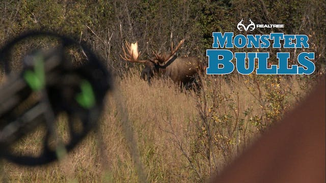 Unreal Alaskan Moose Hunt!